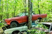 foto of wrecking  - Group of old wrecked and rusty cars in the forest - JPG