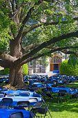 Постер, плакат: Tables and chairs on a lawn under old tree