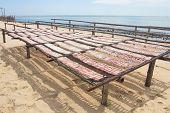 stock photo of squid  - squid dried on nylon sea food Folkways of thailand - JPG