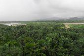 pic of rainforest  - Rainforest - JPG