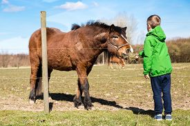 picture of feeding horse  - Young boy in green jacket feeding brown horse with grass on farm - JPG