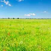 green spring field and beautiful white fluffy clouds poster