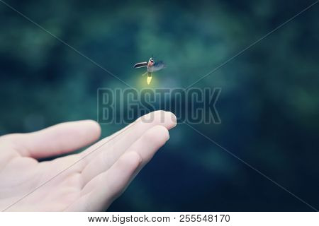 Firefly flying away from a
