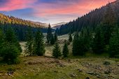 Spruce Forest In Foggy Valley At Reddish Sunrise. Beautiful Autumn Landscape In Mountains. Apuseni N poster