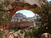 Archway To Nature