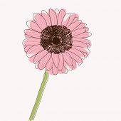 Gerbera Daisy flower, retro style vector