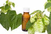 Natural Medicine  -  Geen Hops &  Brown Bottle.  Alternative Medicine, Brown Bottles & Hops. poster