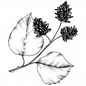Vector Autumn Leaves. Isolated Illustration Element. Leaf Plant Botanical Garden Floral Foliage. poster