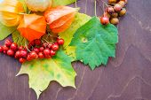 Red Berriaes And Autumn Leaves On Old Wooden Background.colorful Leaves And Physalis.autumn Thanksgi poster