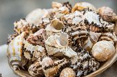 Shells, Conch Shell, Scallop Shell Close Up. poster