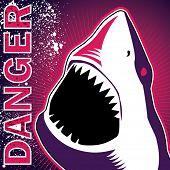 Banner diseñado con peligroso tiburón. Ilustración del vector.