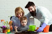 Mom, Dad&son Planting Flowers At Home. Little Gardener Boy With Mother&father. Work For Whole Family poster