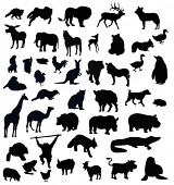 stock photo of animal silhouette  - animals silhouettes - JPG