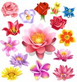 image of small-flower  - flower set - JPG