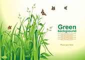 Spring background. Green grass. Vector illustration.