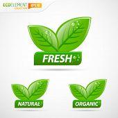 Green leafs mit frischen natürlichen und organischen Schild