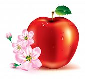 foto of apple blossom  - beautiful red apple and flowers on a branch - JPG
