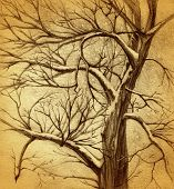 hand drawn tree on grunge background