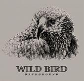 eagle grunge illustration