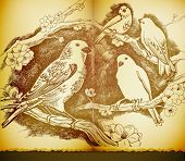 vintage paper with artist drawing of birds