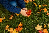 Kids Play In Autumn Park. Children Throwing Yellow And Red Leaves. Little Child In Blue Coat With Ma poster