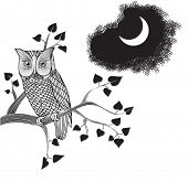 Moonlight Owl, Gekritzel