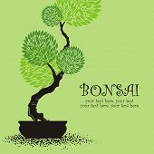 stock photo of bonsai  - vector stylized bonsai - JPG