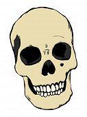 Raster human skull