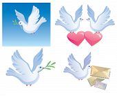 Pigeon -  symbol of the peace, love,  carrier pigeon