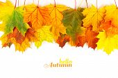 Autumn background with colorful leaves. Red, orange and green autumn leaves. poster