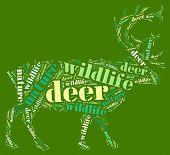 Textcloud: silhouette of deer