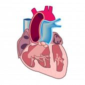 image of open heart surgery  - Human heart - JPG