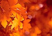 pic of fall leaves  - highly detailed image of autumn leaves very shallow focus - JPG
