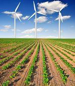 campo de girasol recién sembrada con turbinas de viento