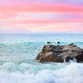 Two seagulls on the rock at sunset. Tasman sea