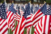 stock photo of flag pole  - Closeup of stars and stripes flags in a park - JPG