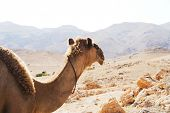 lovely camel
