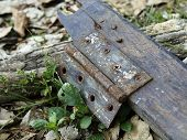 Abandoned Hinge and Growing Weed