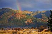 Montana arco iris de oro amarillo Tamarack árboles en las colinas de Caen Col
