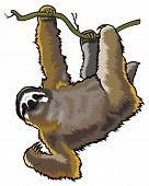 Brown Three Toed Sloth
