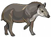 stock photo of tapir  - lowland tapir - JPG