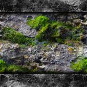 texture walls mold moss and cobwebs background your message wall