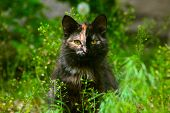 unusual multicolored cat sitting in green grass and looking at t