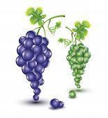Dark and bright grapes