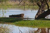 Oude houten boot onder boom op de oever van de rivier de zomer