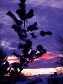 December Sky Ablaze