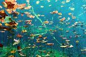 Cenote bajo el agua