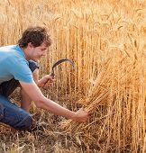 Portrait Of Smile Harvest Farmer With Sickle