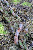 Anchorage chain