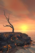 Dead Tree On Lava Flow